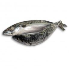 Скумбрия c/г с/м 250+ About Fish (ISL) (2*11кг)