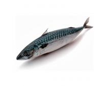 Пелагическая рыба