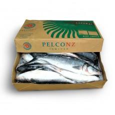 Австралийский лосось (кахавай) с/г с/м 1000-3000 Pelco NZ (NZL)
