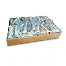 Нототения тушка с/м 100-300 Walvisfish S.L. (ESP)